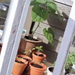 Greenhouse на террасе